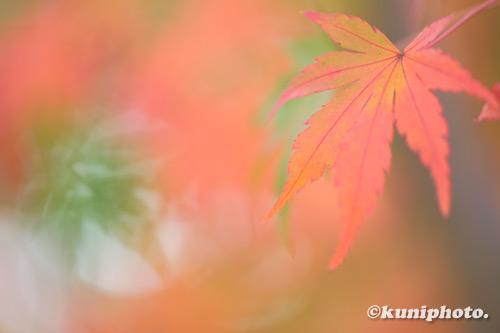 201122_banpaku_021_XH1