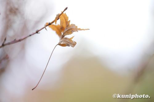 1211_201128_hattori_126_XH1