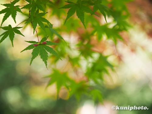 201106_tsurumi_005_EM13