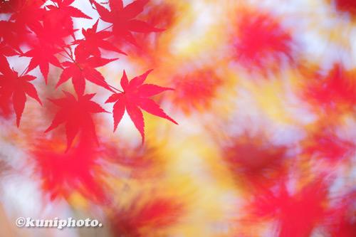 201129_uenoshinrin_039_XH1