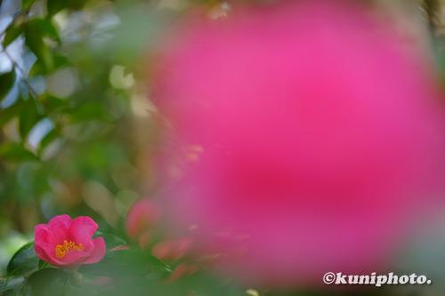 201129_uenoshinrin_073_XH1