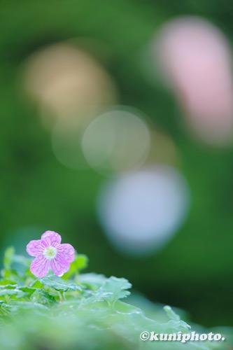 201217_konohana_108_XH1