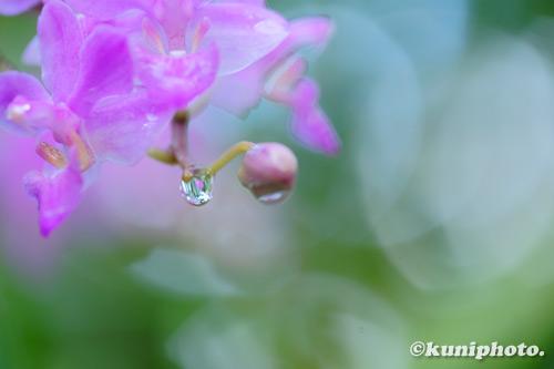 201220_konohana_061_XH1