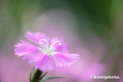 210216_kyoto_632_XH1
