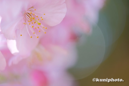 210303_tsurumi_173_XH1