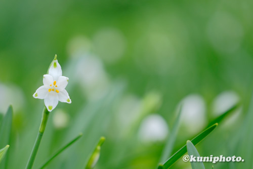 210307_kyoto_472_XH1