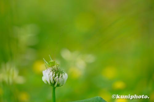 210413_tsurumi_321_XH1