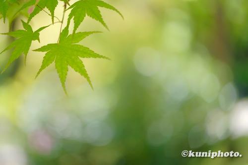 210425_tsurumi_084_XH1