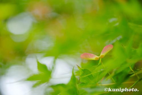 210508_tsurumi_006_XH1