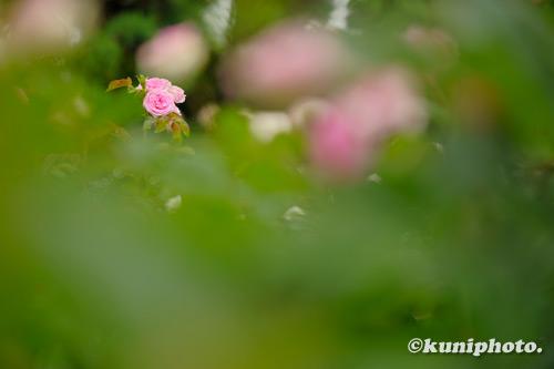 210519_aramaki_319_XH1