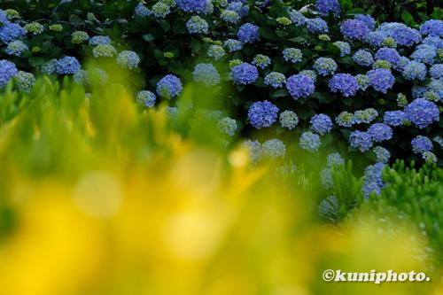 210625_tamamizu_336_XH1